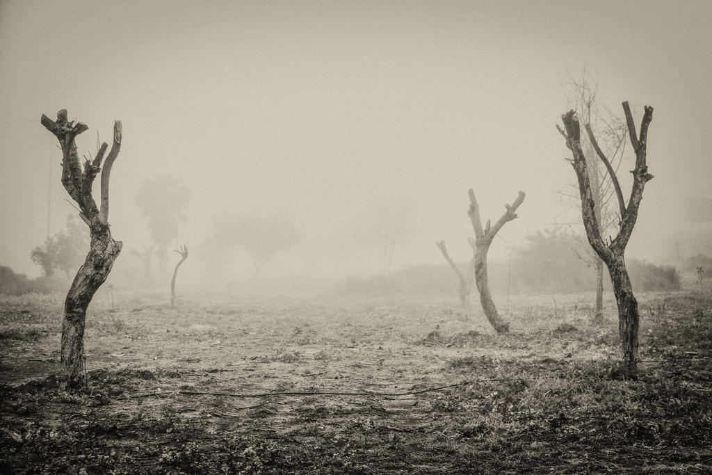 Figures in the mist by VTAL