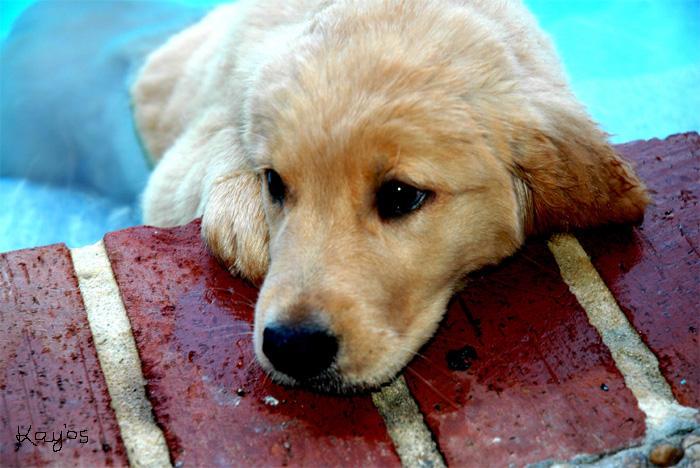 Dog by SuprSxyMac