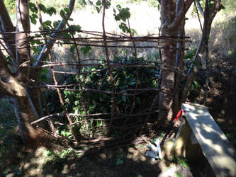 cherry tree weaving... by HawkTnz