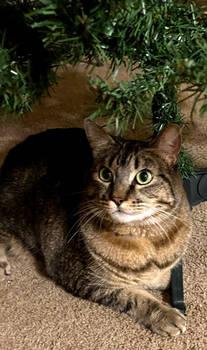 Christmas Tree Lover