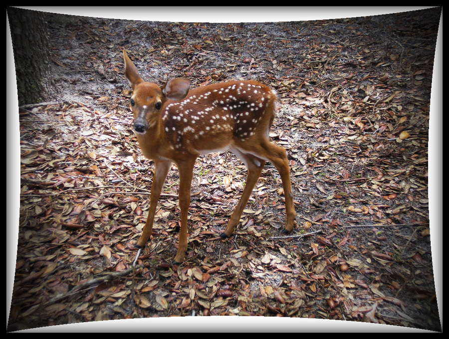 Fawn by Roxis805