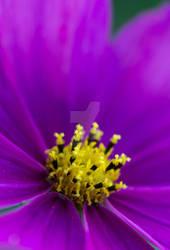 Purple by nezy13