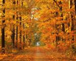 trodden autumn path