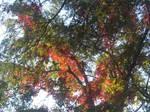 autumn flourishing