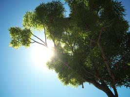 Tree of Life by KevDog32