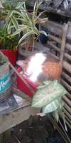 My cat sleep at my plant