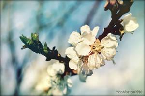 25.04.2015 by MissNorton1990