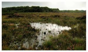 Irish Bog Pool