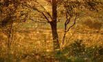 Barnagaw Golden hour IV