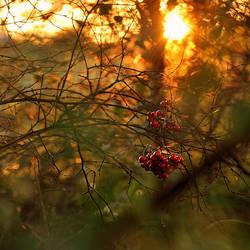 Barnagaw Golden hour XI