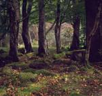 Lisnascreghog Wood