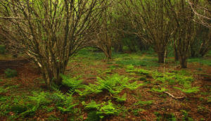 Drumlamph Wood, Spring V by younghappy