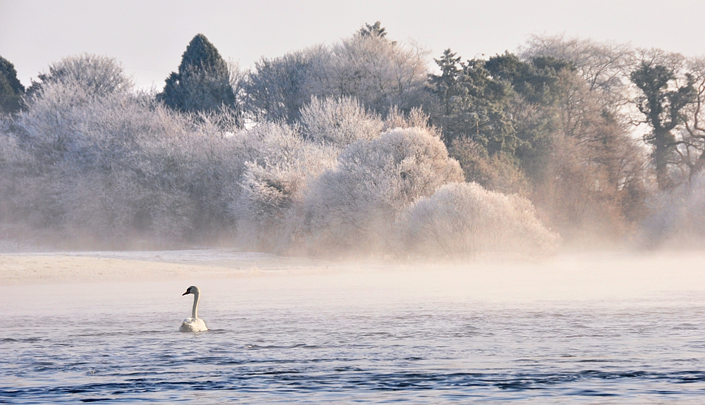 Swan on the Bann III by younghappy