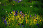 Bluebell season V by younghappy