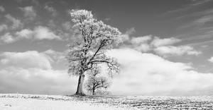 Tree in Winter, Kilrea, Northern Ireland