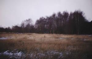 Barnagaw bog mid-winter IV