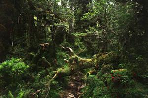 Parque Nacional Hornopiren, Patagonia, Chile
