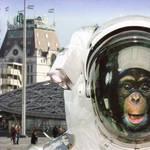 Monkey Business by junuxx