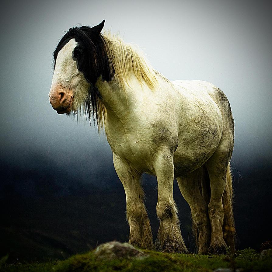 [صورة مرفقة: Evil_Horse___updated_by_K_sneachta_B.jpg]