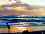 Pelicans View by DylanStricker