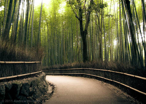 Wide Paths and Grand Bamboo