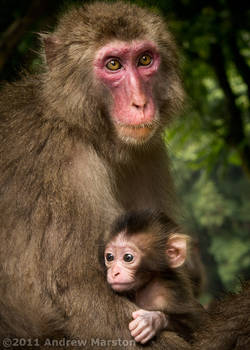 Monkey Mtn: Mother and Child