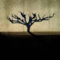 urban tree by tuminka