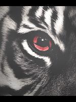 Tiger Sharingan by yuri008