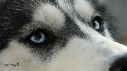 My dog amazing eye