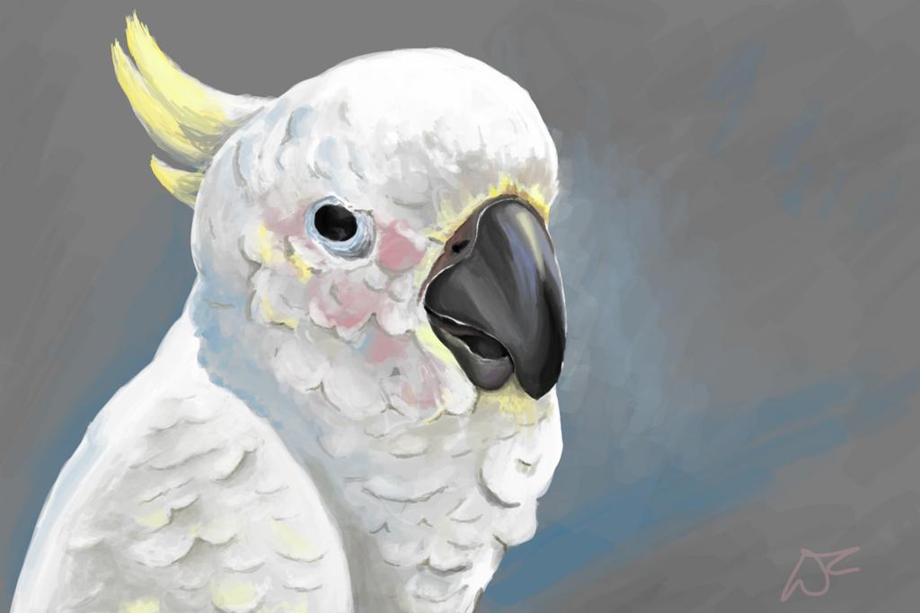 Parrot by Malinka00