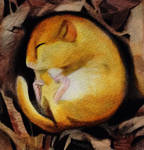 Sleeping Dormouse