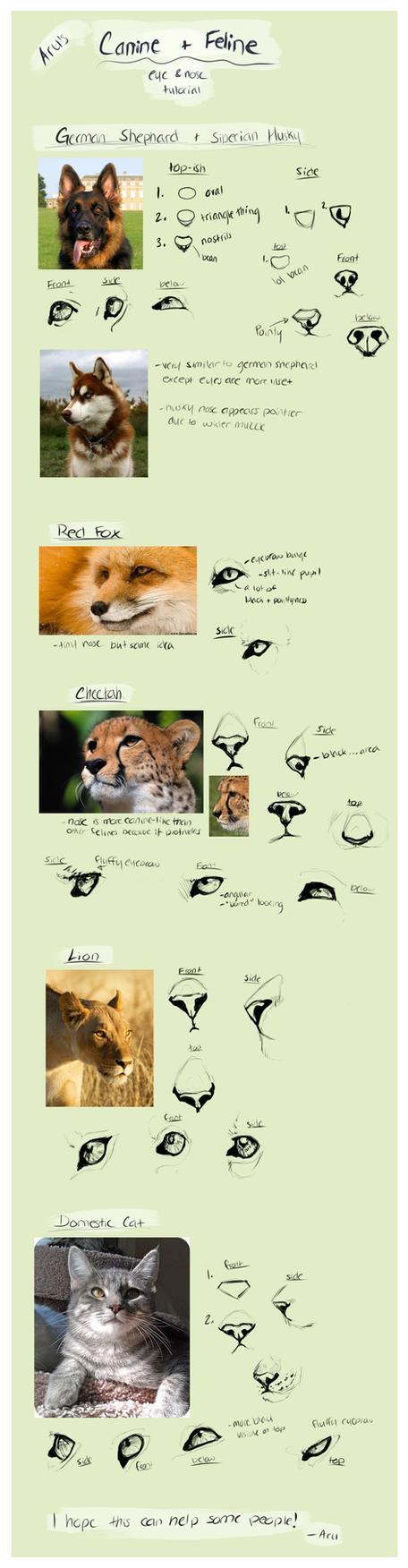 Canine and Feline, nose and eye Tut by SyerAru