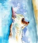 68 - Chihuahua by Rikkimaru129