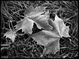 Fallen, frozen... by sofree