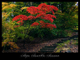 Steps Pass Her Passion by UrbanRural-Photo