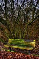 Glowing Moss Bench by UrbanRural-Photo