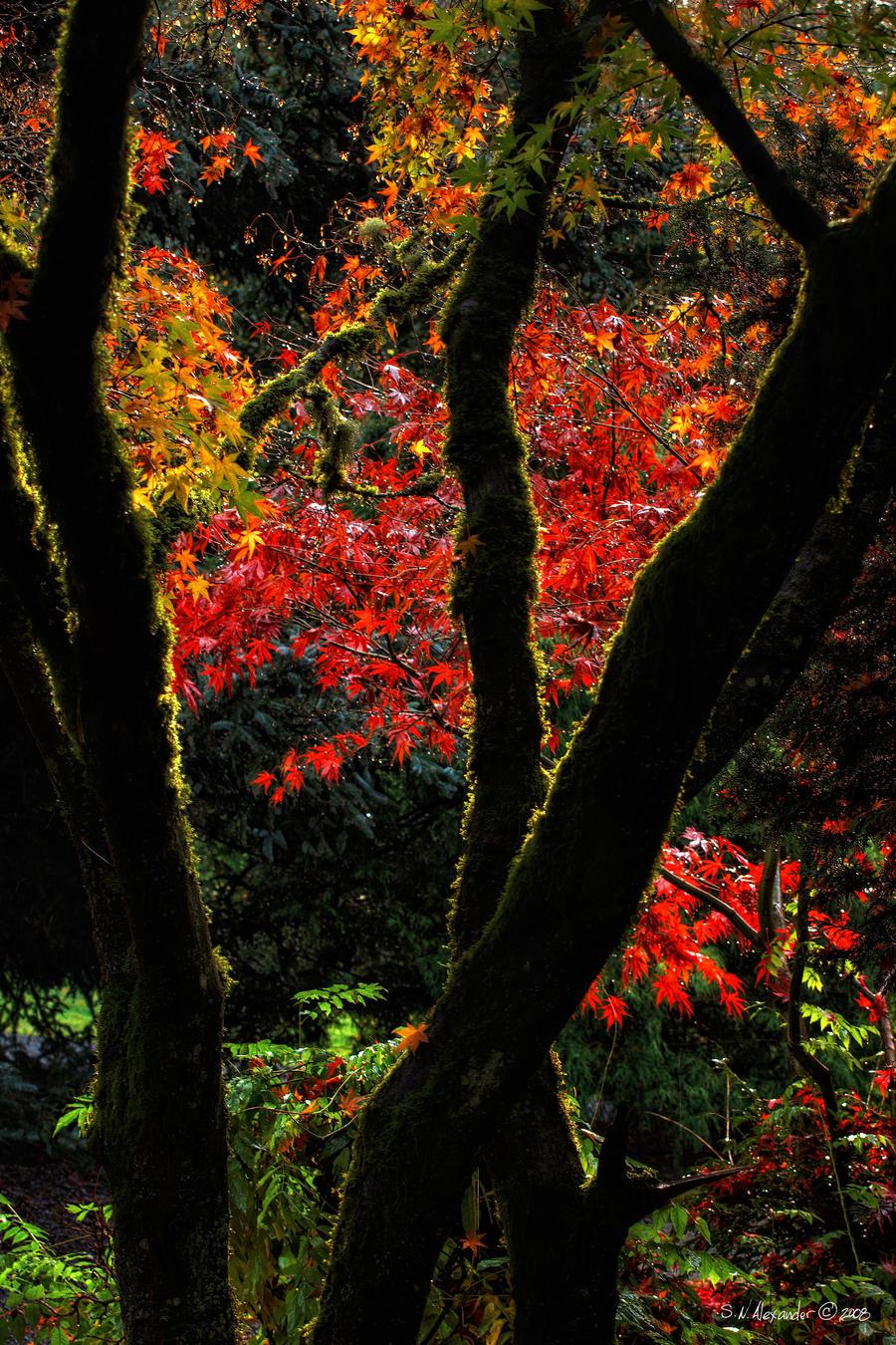 Fall Through by UrbanRural-Photo