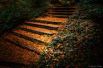 Light Falls on Absence Steps