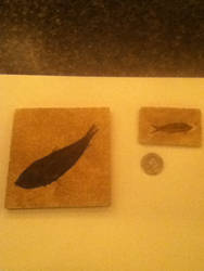 Fish Fossils by RexFan684