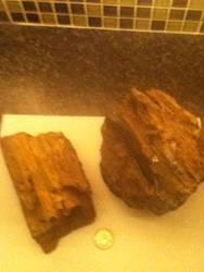 Petrified Wood by RexFan684