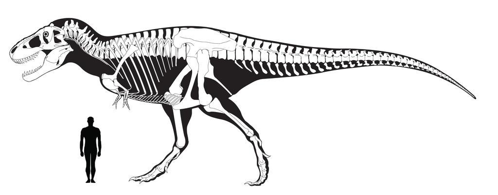T.rex Size Comparison by RexFan684