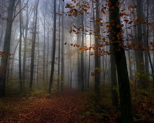 Towards the Fog