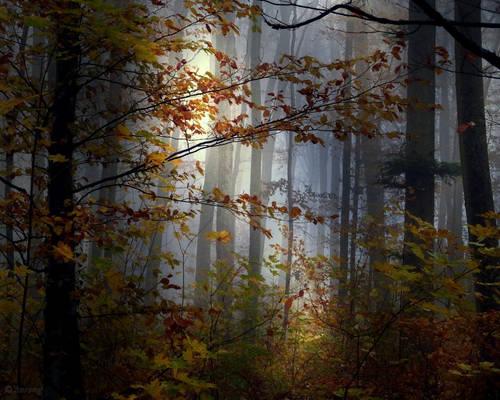 Towards the Fog 2