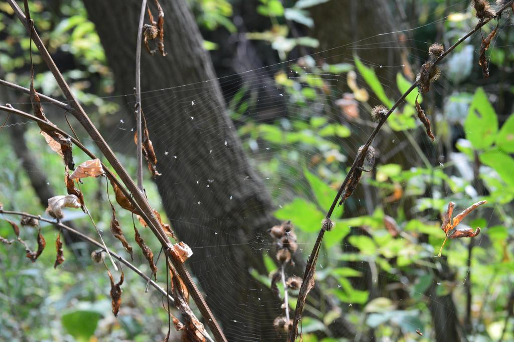 Web by Ciao-Arrivederci