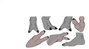 Sangheili foot study