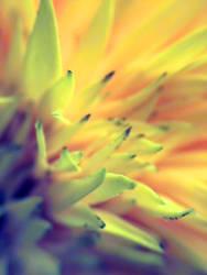 Macro Sunflower Love