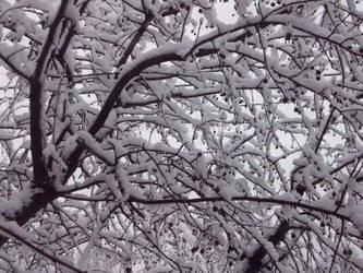 Crabapple snow by Cazimi
