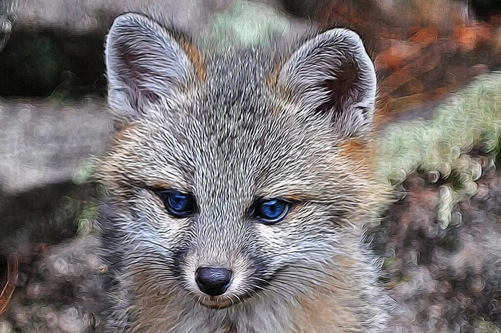 Baby gray foxes - photo#21