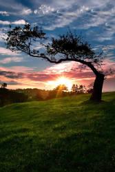 Lone Tree by chrisgin