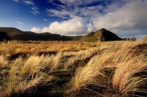 Whatipu Grass by chrisgin